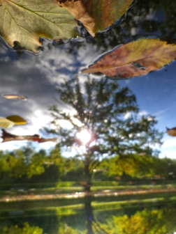 Tiergarten in the Autumn. Wonderful