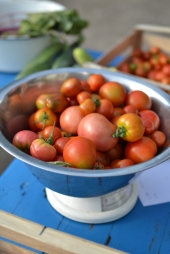 Sublime tomatoes from the Polytunnel.